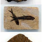 fossils santorini